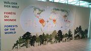 Eine Welt ohne Wald? Ausstellung und Vortragsreihe im Papiliorama Kerzers