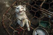 VIER PFOTEN schliesst erstmals Katzen-Schlachthaus und -Restaurant in Vietnam
