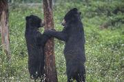 VIER PFOTEN eröffnet neues Bärenschutzzentrum in Vietnam