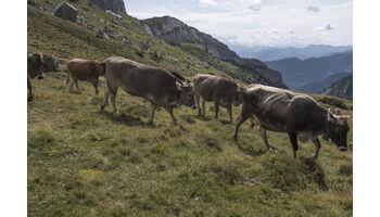 Mit einem weinenden und einem lachenden Auge: Bloggende Käser nehmen Abschied von der Alp