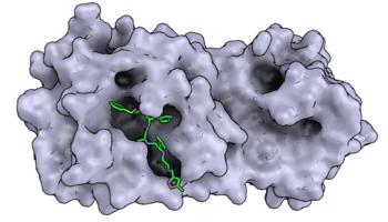 Strukturen von Proteinen des Coronavirus mit Schweizer Technologie gelöst