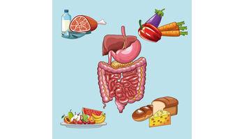 Ergebnisse nicht haltbar: Forscher überprüfen Studien zur Wirkung von Süßstoffen auf Darmmikrobiota