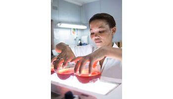 Rooibos hat das Potenzial, hochansteckende Rotaviren zu schwächen