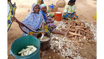 Versuchslabor Afrika: ETH testet Gentech-Maniok in Nigeria gegen den Willen der lokalen Bevölkerung