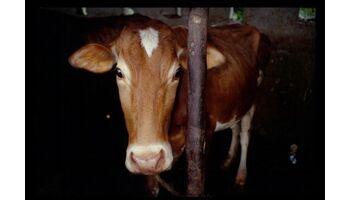 Mercosur: Hormonfleisch für die einen, Armut für die anderen