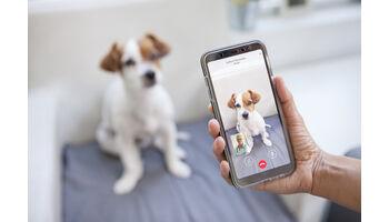 Neues Angebot für Video- und Telefonsprechstunde für Tierhalter
