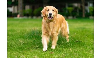 Innovation bei der Schmerztherapie für Hunde