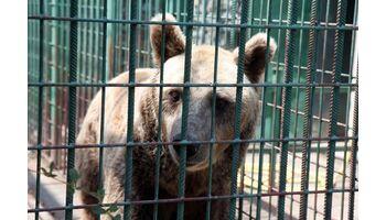 Rettung von zwei illegal gehaltenen Braunbären in Kroatien