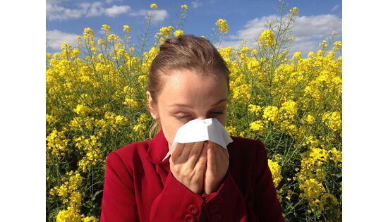 Die Hasel lanciert die Pollensaison – später als üblich