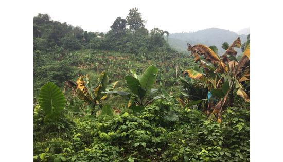 Chiquita und Wageningen University & Research gegen TR4